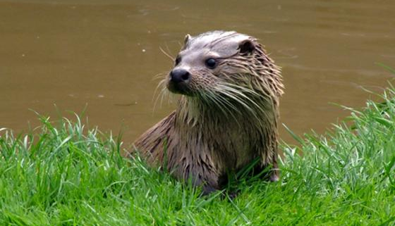 Tamar Otter and Wildlife Centre, Cornwall