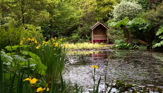 Pinetum Park and Pine Lodge Gardens, Cornwall