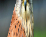 Cornish Birds of Prey Centre, Cornwall